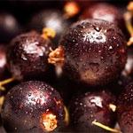 свойства черной смородины